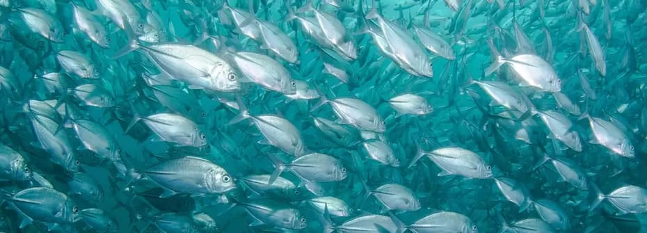 Intresse för sportfiske