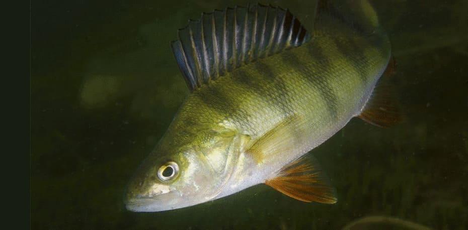Hur vet du att det finns fisk i sjön?